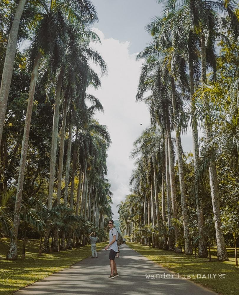 i giardini botanici di kandy