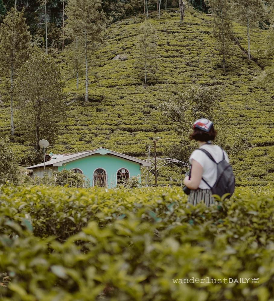 piantagioni di tè in sri lanka